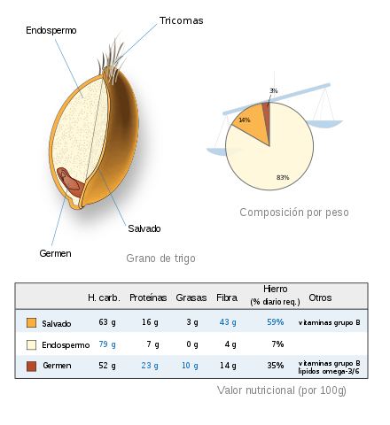 germen de trigo partes