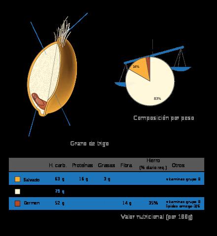 partes del germen de trigo